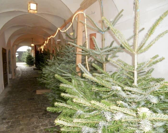 Christbaumverkauf am Kirchenplatz in Aschach an der Donau
