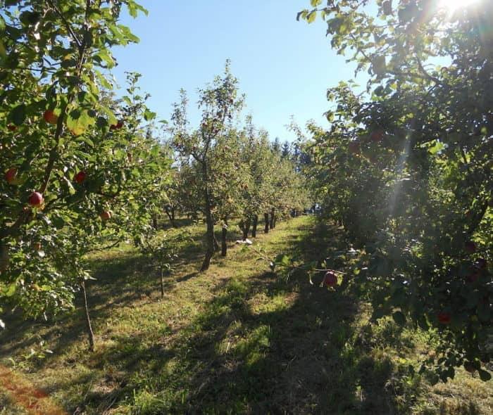 Besuchen Sie die Kurse zur Obstbaumpflege am Arthofergut!